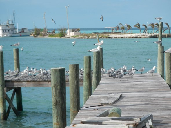 sea gulls chilling on the dock