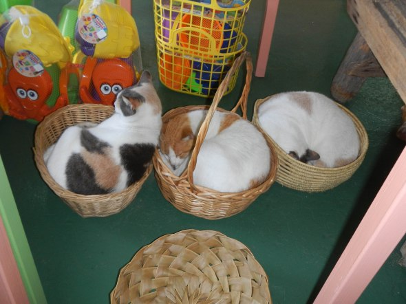 Basket of cats at Dilly-Dally