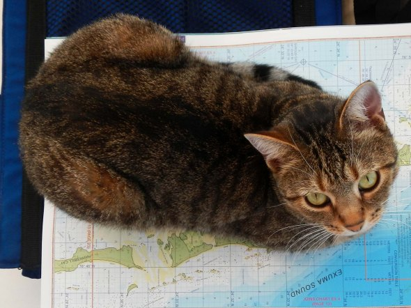 Cat on map