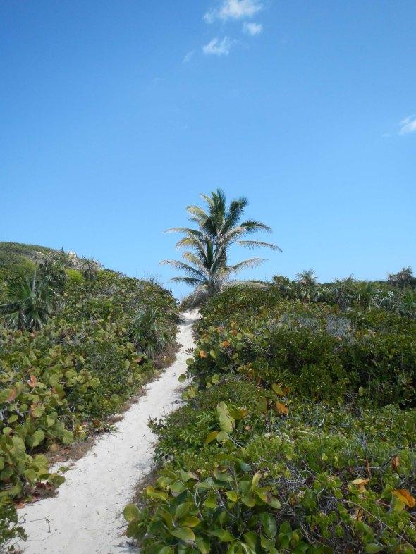 Ahhhhh the path AND the coconut tree