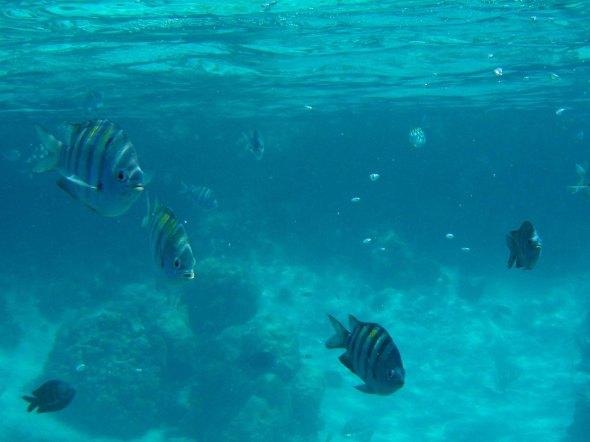 Nemo?  Nemo who?