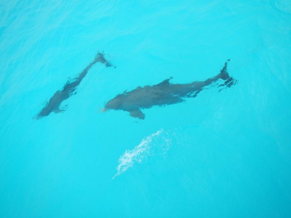 The Dolphins, a reward!