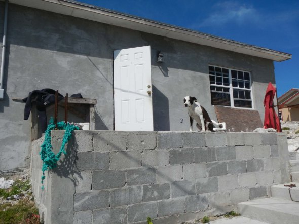 For the Dog lover, great house, not quite finished though.