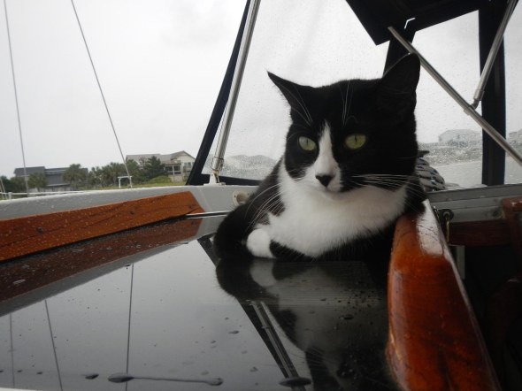 Mini the kitty on the pexi-glass hatch cover checking out the rain
