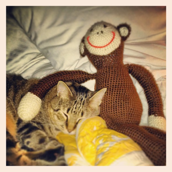 Roy sleeping with Mike the Monkey  on our bed